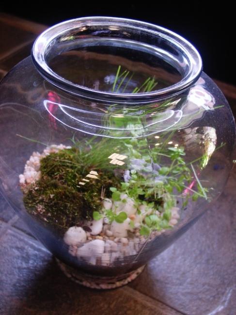 Hoboken terrarium