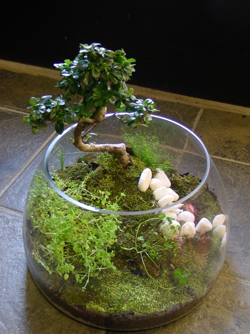 Jersey City NJ Terrarium