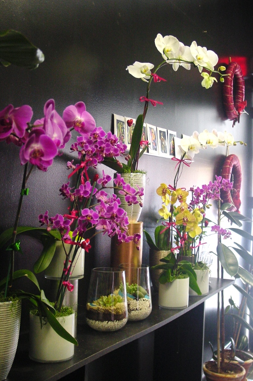 Orchid plants in Hoboken Store for Mother's day