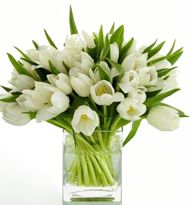 White tulip arrangement from Limelight Floral Design Hoboken - Jersey CIty to be delivered to Weehawken, Edgewater, Union City, North Bergen